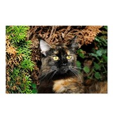 Maine Coon Cat Alissa Postcards (Package of 8)