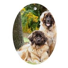 leonberger Oval Ornament