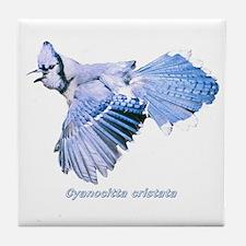 Cyanocitta cristata Tile Coaster