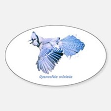 Cyanocitta cristata Oval Decal