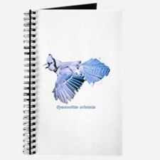 Cyanocitta cristata Journal