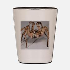 Wolf Spider Shot Glass