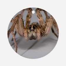 Wolf Spider Round Ornament