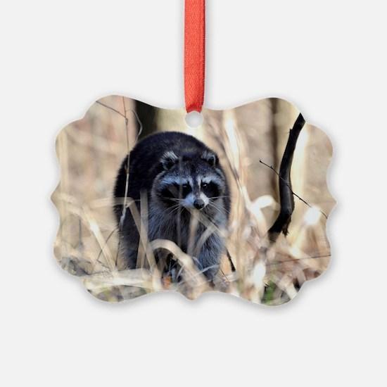 Foraging Raccoon Ornament