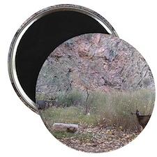 Phantom Ranch Deer Magnet
