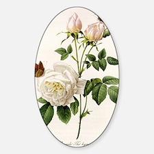 vintage botanical art. white rose f Sticker (Oval)