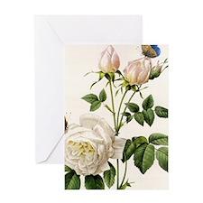 vintage botanical art. white rose fl Greeting Card