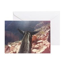 South Kiabab Grand Canyon Mule Ride Greeting Card
