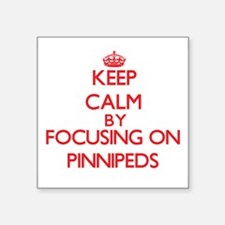 Keep calm by focusing on Pinnipeds Sticker