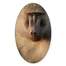 BABOON Decal