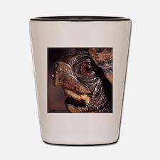 turtle Shot Glass