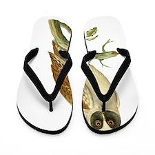 Black Masked Owl Flip Flops