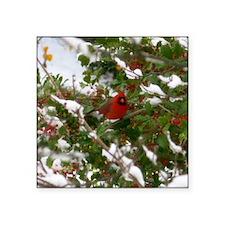 """Red Robin  Square Sticker 3"""" x 3"""""""