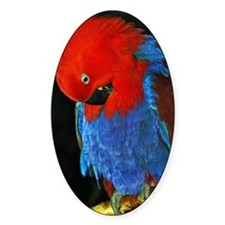 Red Parrot Decal