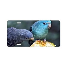 Lineolated Parakeet Aluminum License Plate