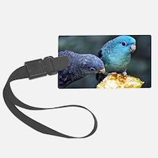 Lineolated Parakeet Luggage Tag