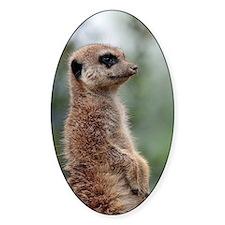 Meerkat056 Decal