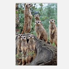 Meerkat063 Postcards (Package of 8)