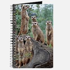 Meerkat063 Journal