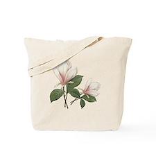 Vintage botanical art, elegant magnolia flower. To