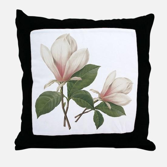 Vintage botanical art, elegant magnolia flower. Th