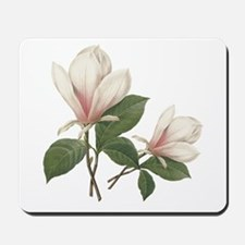 Vintage botanical art, elegant magnolia flower. Mo