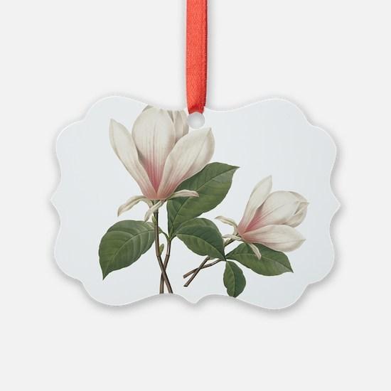 Vintage botanical art, elegant magnolia flower. Pi
