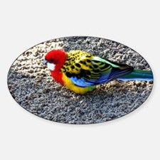 Exotic Bird Sticker (Oval)