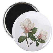 Vintage botanical art. Light pink magnolia flower