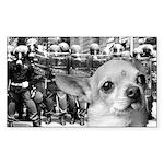 Militant Chihuahua Rectangle Sticker