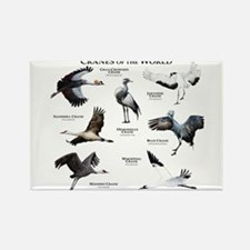 Cranes of the World Rectangle Magnet