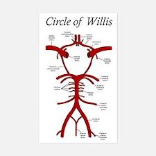 Circle of Willis Decal