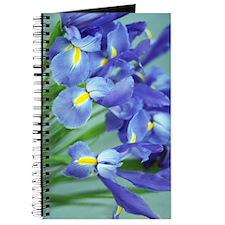 Spring Purple Irises Photo Journal