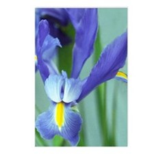Spring Purple Irises Photo Postcards (Package of 8