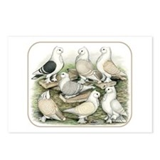 Classic Frill Pigeons Satinettes Postcards (Packag