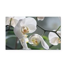 Orchid011 Rectangle Car Magnet
