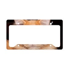 Maine Coon Cat Kato License Plate Holder