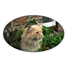 Maine Coon Cat Kato Decal