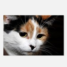 Calico Cat Chiara Postcards (Package of 8)