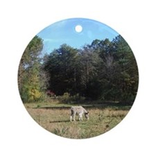 Miniature donkey eating Round Ornament