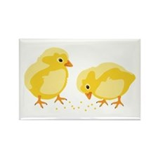 Baby Chicks Magnets