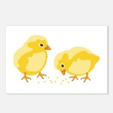 Baby Chicks Postcards (Package of 8)