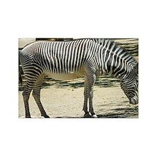 Zebra012 Rectangle Magnet
