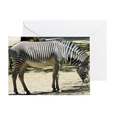 Zebra012 Greeting Card