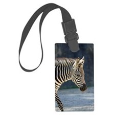 Zebra019 Luggage Tag