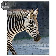 Zebra019 Puzzle