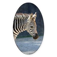Zebra019 Decal