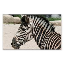 Zebra021 Decal