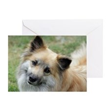 IcelandicSheepdog022 Greeting Card