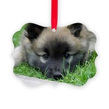 Icelandic Sheepdog025 Picture Ornament